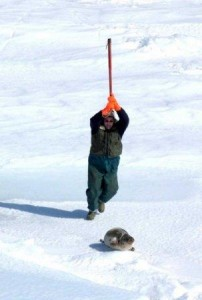 2008canadiansealhunt